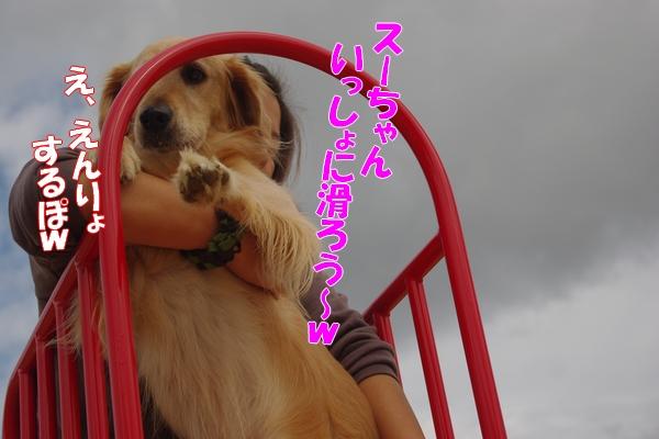 IMGP9090_20111111013747.jpg
