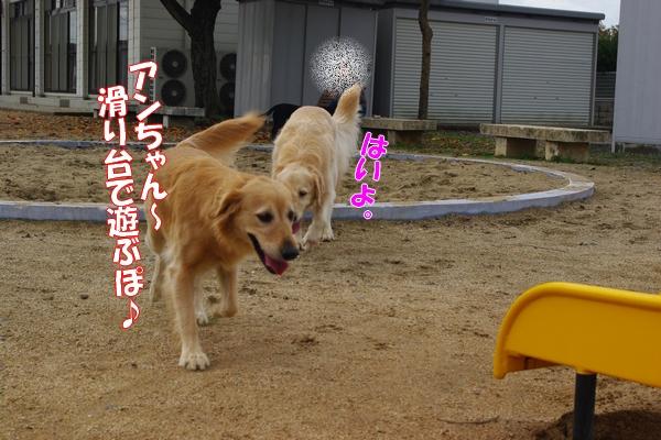 IMGP9111_20111110003751.jpg