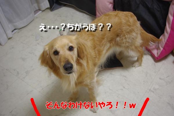 IMGP9117_20110413000640.jpg
