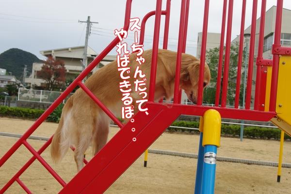 IMGP9119_20111110003806.jpg