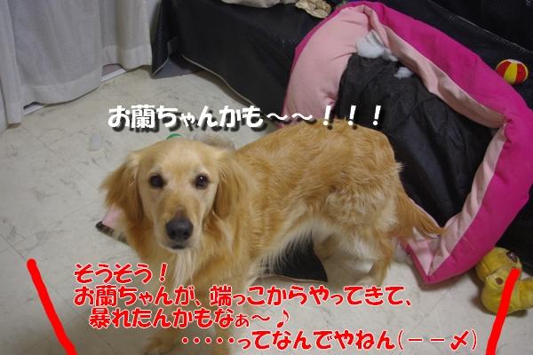IMGP9120_20110413000638.jpg
