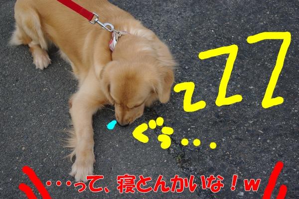IMGP9292_20111115002013.jpg