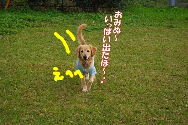 IMGP9300_20111116003708.jpg