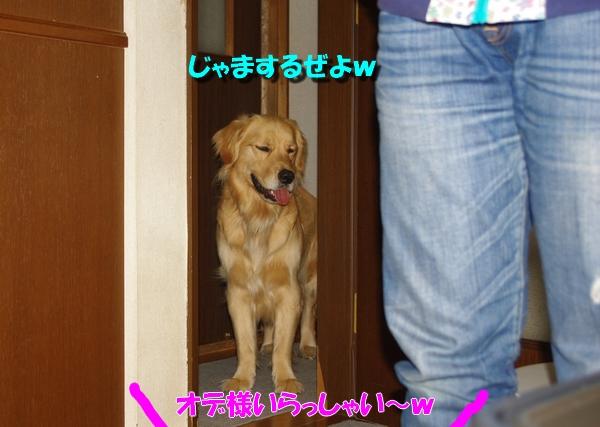 IMGP9321.jpg