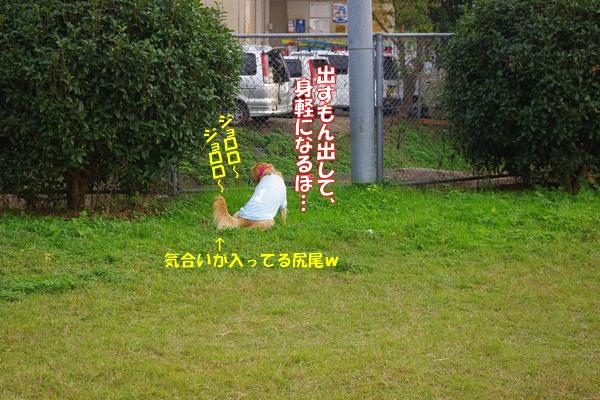IMGP9321_20111116003703.jpg