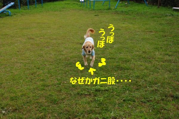 IMGP9352_20111116003811.jpg