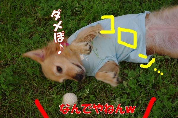 IMGP9372_20111116003809.jpg