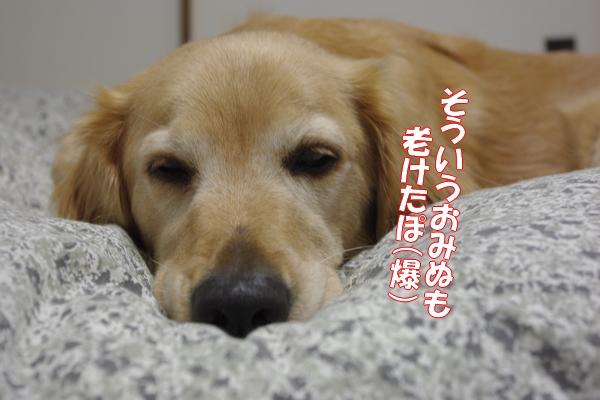 IMGP9385_20111118000946.jpg