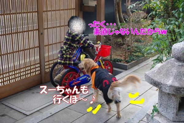 IMGP9389_20120113004920.jpg