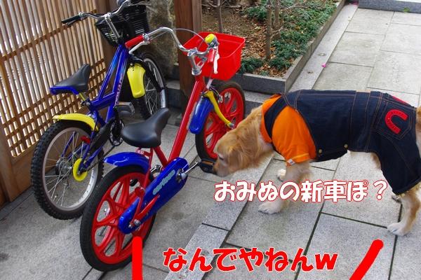 IMGP9391_20120113004919.jpg