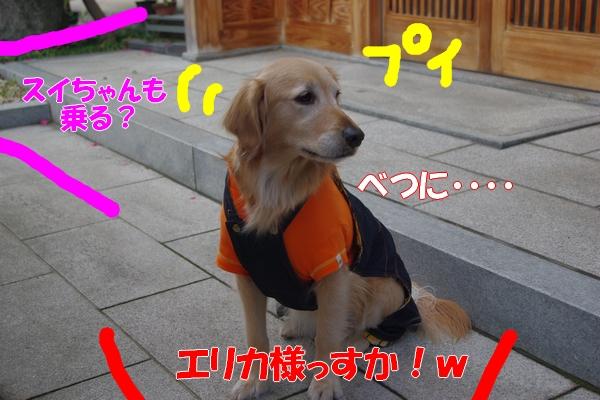IMGP9394_20120113004918.jpg