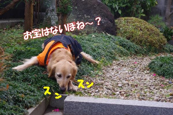 IMGP9408_20120113010538.jpg