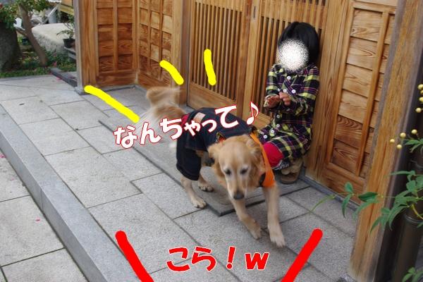 IMGP9413_20120113010536.jpg