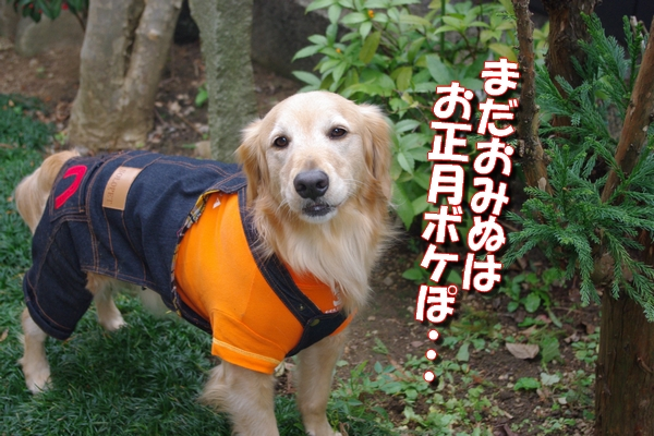 IMGP9423_20120103234843.jpg
