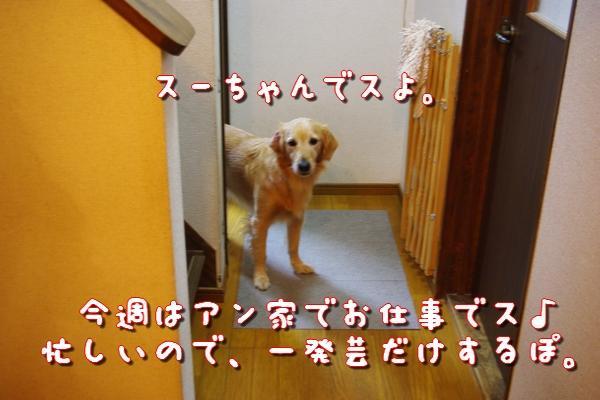 IMGP9440_20111120004132.jpg