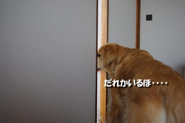 IMGP9465_20110415002147.jpg