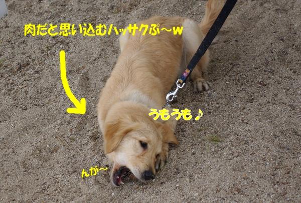 IMGP9479.jpg