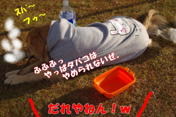 IMGP9481_20120109224000.jpg