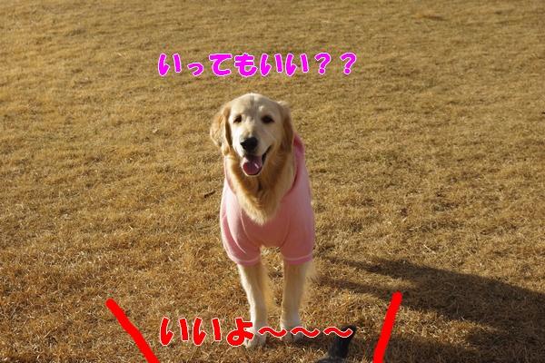IMGP9487_20120109223959.jpg