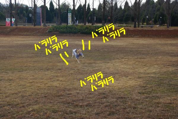 IMGP9490_20120109223959.jpg
