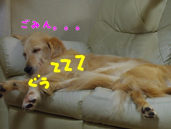 IMGP9492_20111120204010.jpg