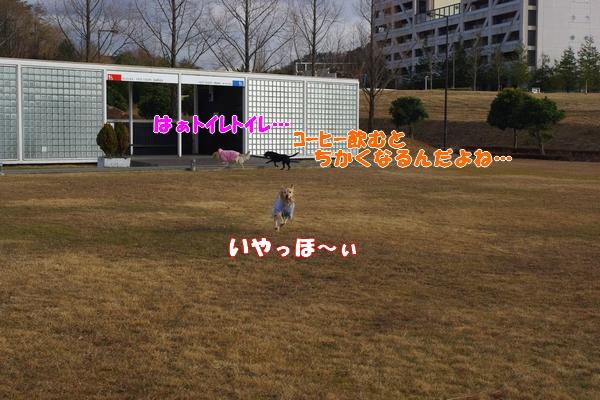IMGP9496_20120109223958.jpg