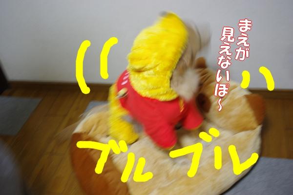IMGP9529_20111122001441.jpg