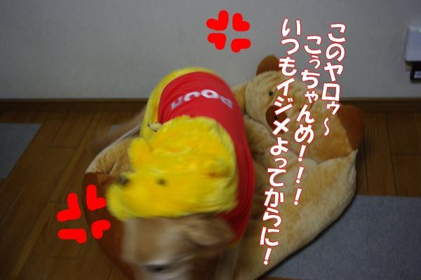 IMGP9530.jpg