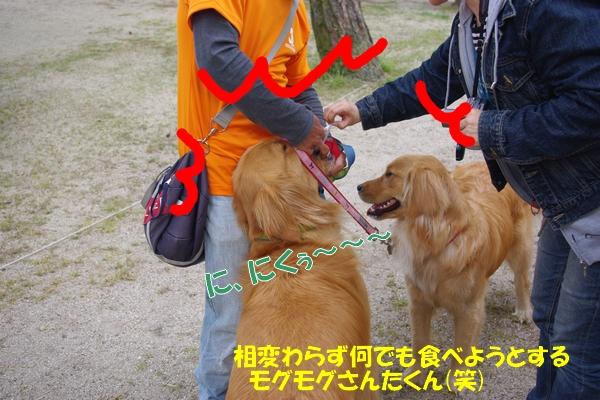 IMGP9544_20110509002649.jpg