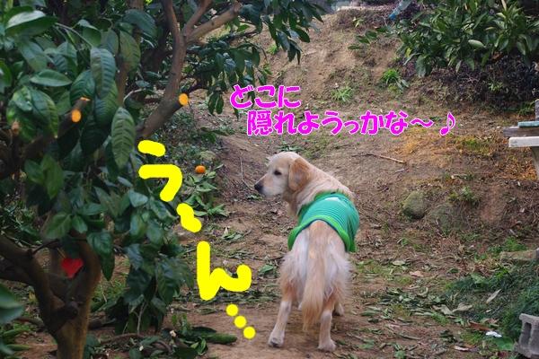 IMGP9571_20120110224729.jpg