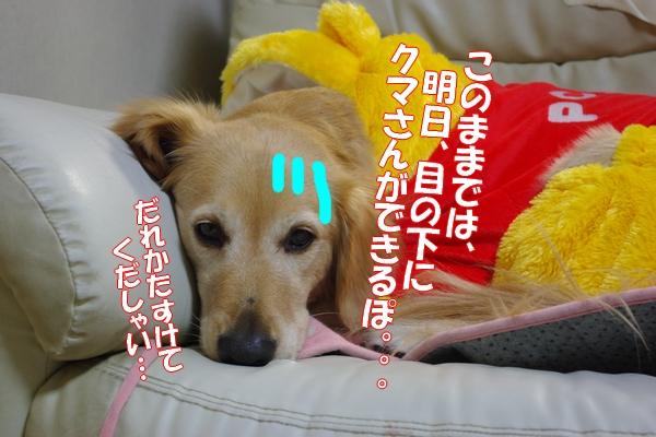 IMGP9603.jpg