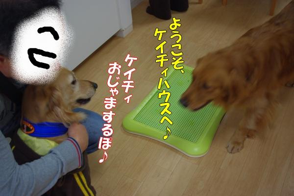 IMGP9627_20111124003719.jpg