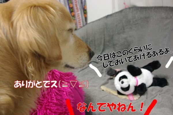 IMGP9660_20120124233126.jpg