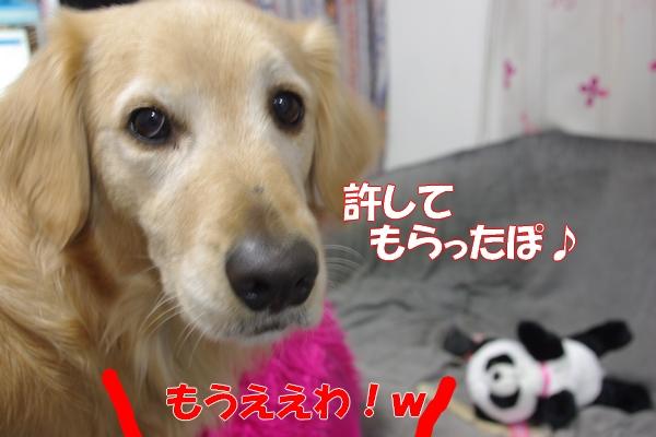 IMGP9664_20120124233125.jpg
