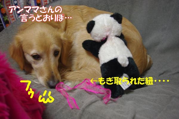 IMGP9686_20120126233442.jpg
