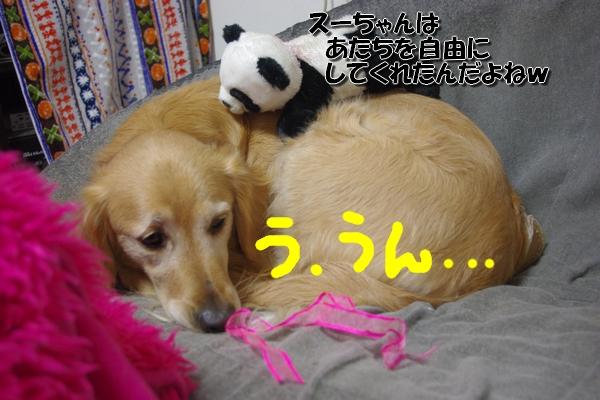 IMGP9691_20120126233442.jpg