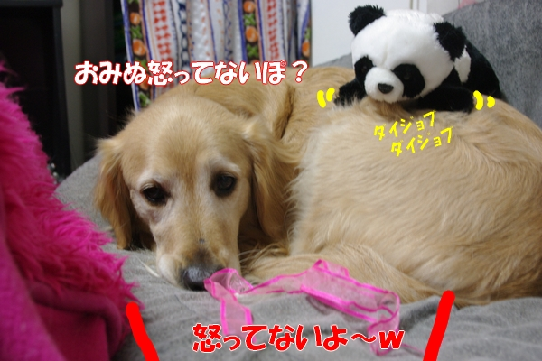 IMGP9697_20120126233441.jpg
