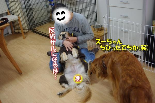 IMGP9700_20111129003836.jpg