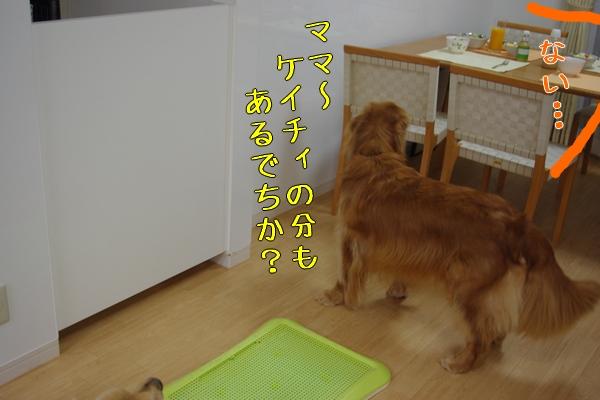 IMGP9704_20111126000926.jpg