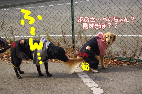 IMGP9726_20120130003158.jpg