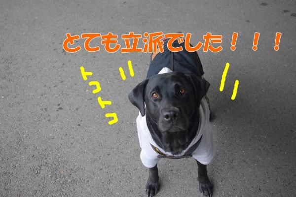 IMGP9728_20120130003157.jpg