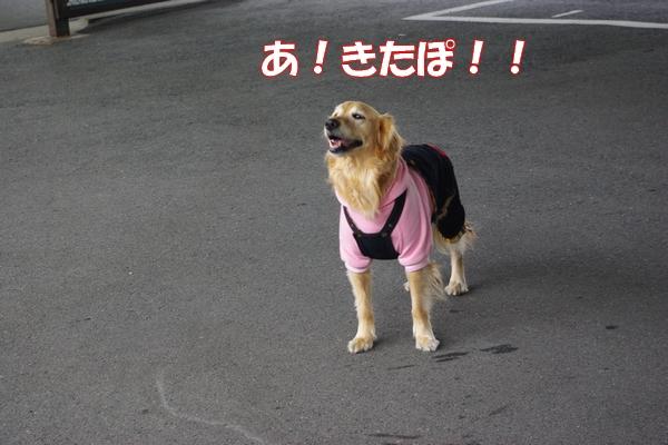 IMGP9731_20120130003157.jpg