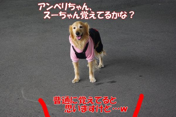 IMGP9732_20120130003156.jpg
