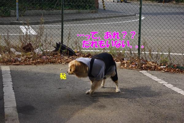 IMGP9743_20120130003259.jpg