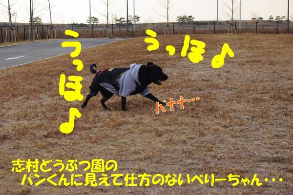 IMGP9761_20120201235656.jpg
