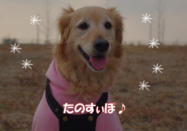 IMGP9790_20120201235729.jpg
