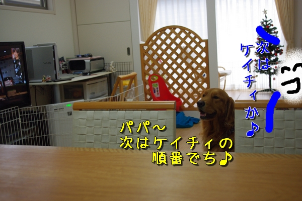 IMGP9795_20111127005103.jpg