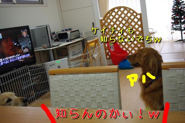 IMGP9800_20111127005058.jpg