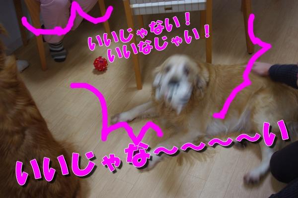 IMGP9864_20111127190546.jpg