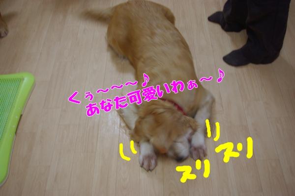 IMGP9885_20111127190651.jpg